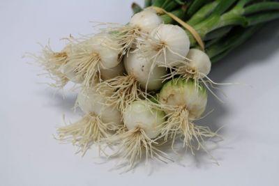 Oignons blancs en botte