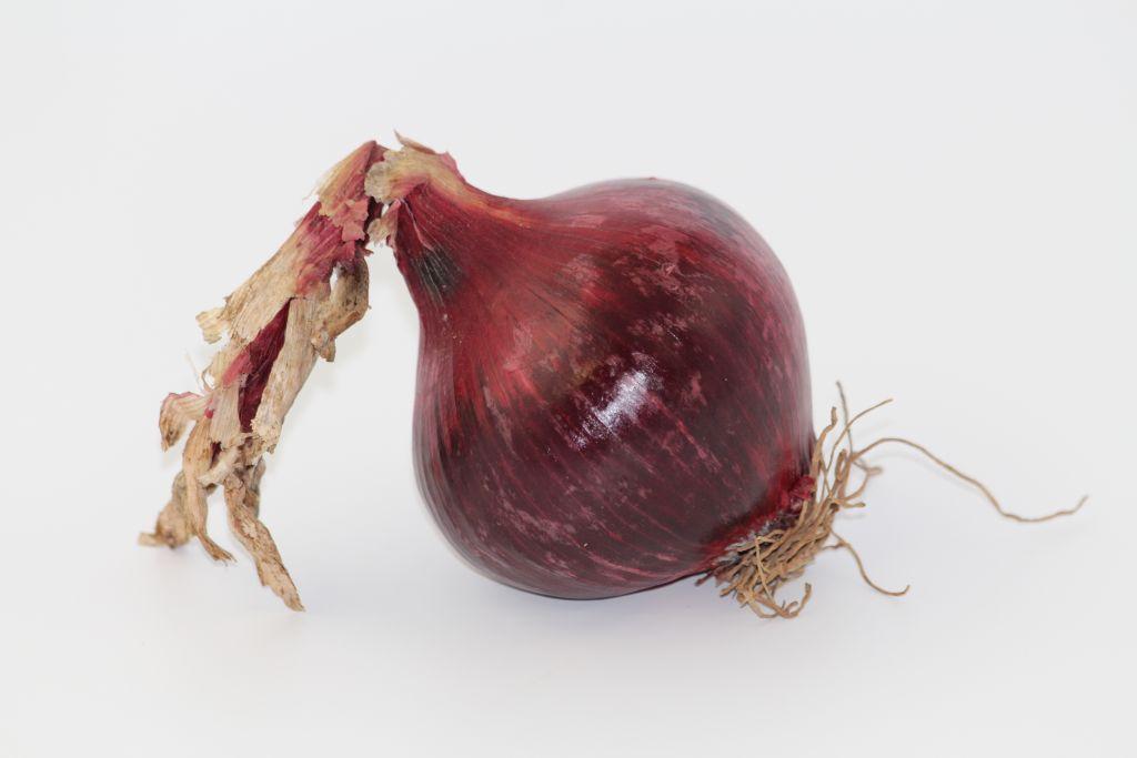 oignon rouge1