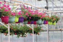 Suspensions et jardinières